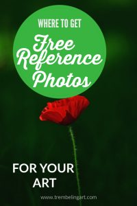 free reference photo of a dark green background with a red poppy