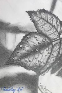 pencil drawing of dewdrops on a leaf
