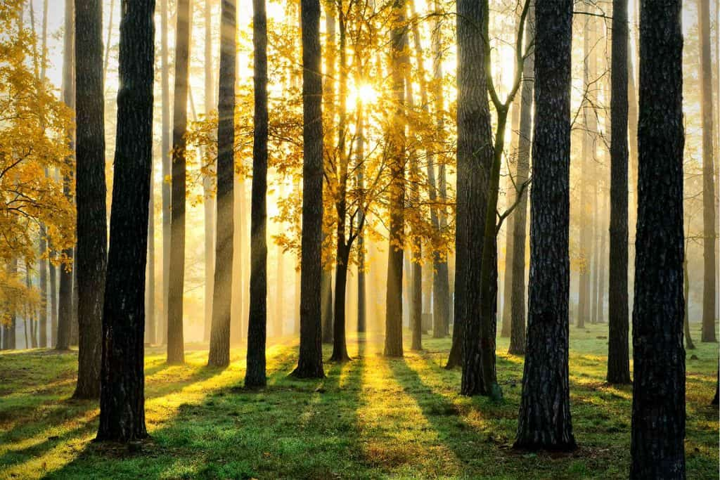 Trees with sunlight and shadows