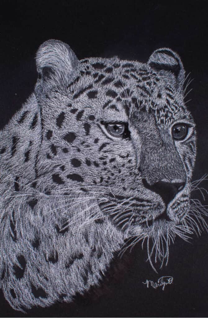drawing of a leopard using white charcoal on black paper