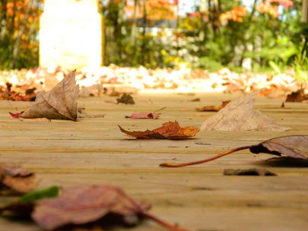 colored fall leaves boardwalk