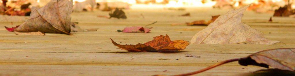 fall leaves on a boardwalk