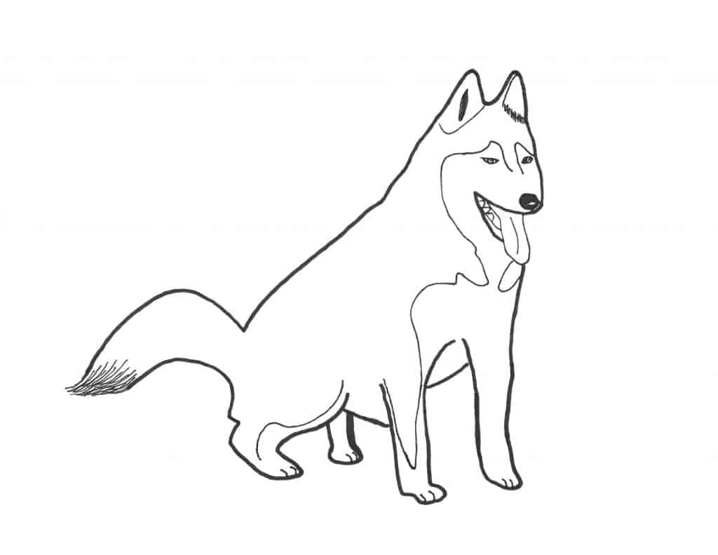 Husky coloring page