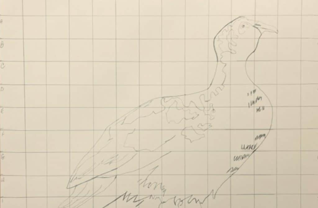 drawing of a bird with a grid drawn over it