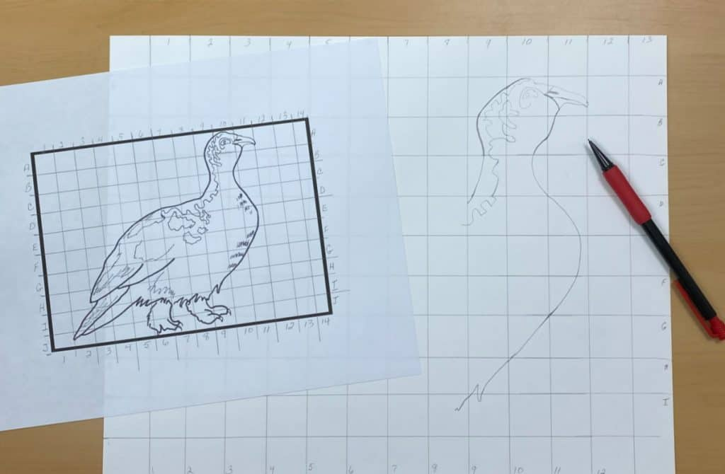 drawing of a bird with a grid drawn on it and a larger paper with grid and larger drawing of a bird