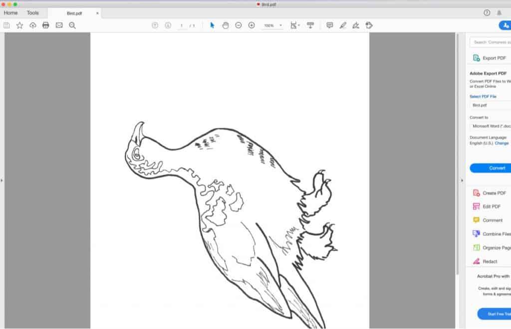 screenshot of a pdf printing of a bird