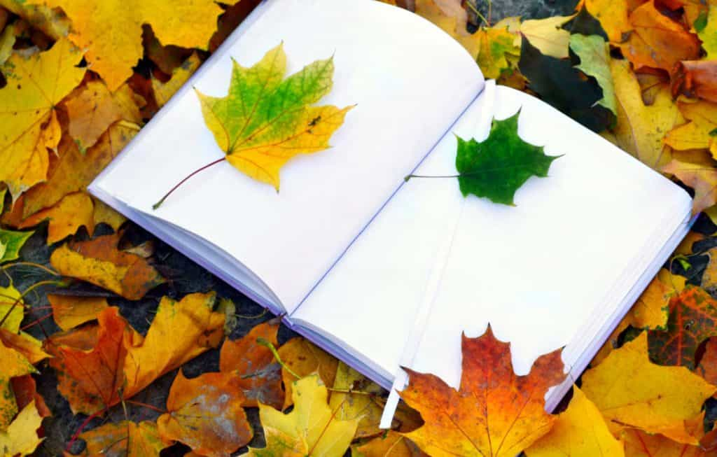 open blank art journal on a bed of fall leaves