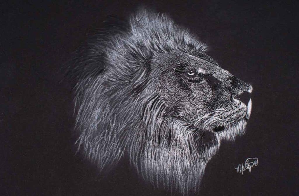 white charcoal drawing of a lion on black paper